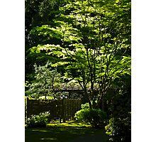 japanese gardens 2 Photographic Print
