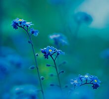 Daydream In Blue by StephenRphoto