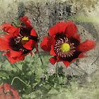 Fragile Red by Carol Bleasdale