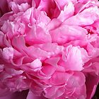 Peony by Julie Van Tosh Photography