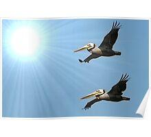 Pelican Duet Poster