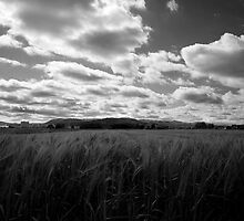 Through the fields after the rain by Ian Middleton