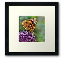 The Red Admiral. Framed Print