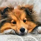 Sheltie In Bed by doggylips