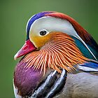 Mandarin Portrait by Daniel  Parent