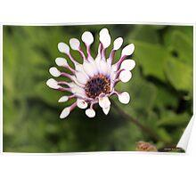 macro flora 034 Poster