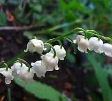 Tinkling Lily of the Valley bells by MarianBendeth