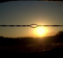 Sunset on Fencing by Candice O'Neill