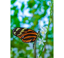 Orange & Black Butterfly White Flowers Photographic Print
