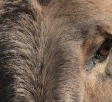 Donkey Eyes Sticker