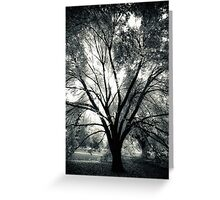 Silhouetted by the light Greeting Card