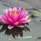 Water Lily by Sandra Lee Woods