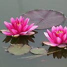 Water LIly Two by Sandra Lee Woods