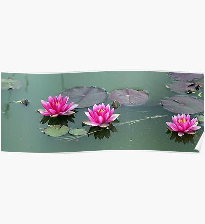Water LIly Three Poster