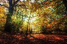 Sunlight Through Autumn Leaves by Nigel Bangert