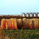 The Canadian Prairies by Rae Tucker