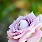 Romance in Purple III by CandiMerritt