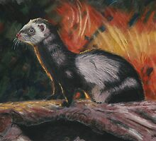 Ferret by Beth Haywood