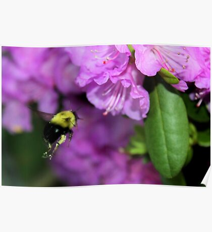 Flying Bumble Bee Collection Pollen Poster