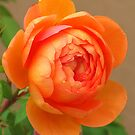 Special Orange blossom by Christine Ford