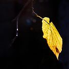 Light on Leaf by Linda  Morrison