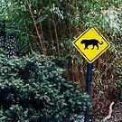 Bronx Zoo by Jasper Smits