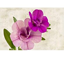 Calibrachoa Petunia Blossoms - Macro Photographic Print