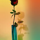 the shadow of a rose by lensbaby