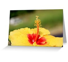 Red and Yellow Hibiscus Greeting Card