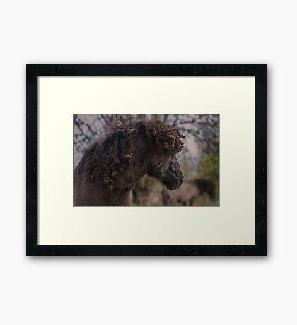 Natty Dread Framed Print