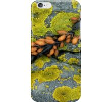 Color on the dike (seaweed and lichen on basalt boulders), North Sea, The Netherlands iPhone Case/Skin