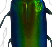 Jewel beetle Sticker