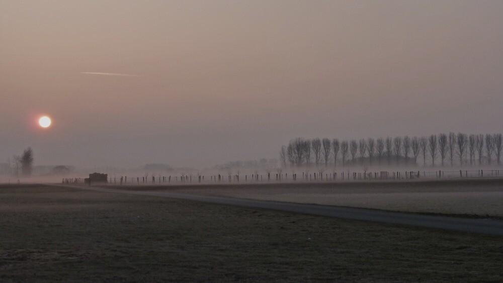 Early bird by Noze