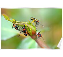 bugs or buds for breakfast? Poster