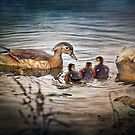 """Female Wood Duck With Babies"" by Melinda Stewart Page"