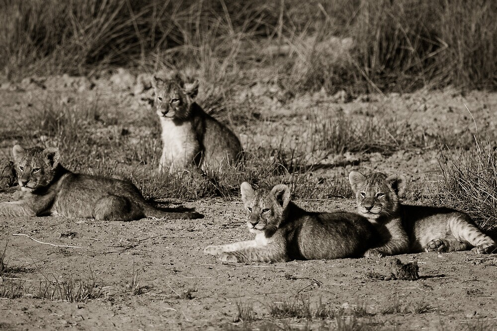 Lion cubs relaxing in the sun by arodericks