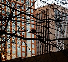 Birds in the tree by Philip Amoroso