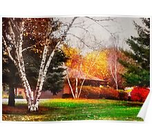 Three Birch Trees Poster