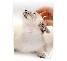 Child Hand and Kitten Poster