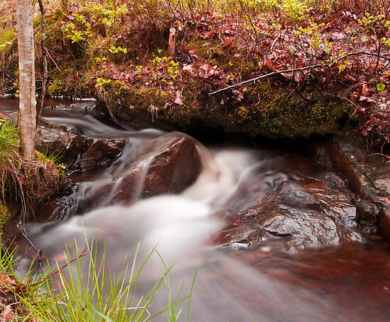 Free flowing by Mark Williams