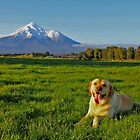 """Mount Taranaki looks more beautiful when I am lying in front of her"" by Rosehaven"