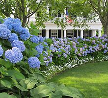 Martha's Vineyard Hydrangeas by Joan Harrison