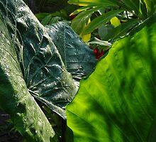 Green Plants - Plantas Verdes by Bernhard Matejka