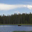 Moose in the Lake by Tamas Bakos