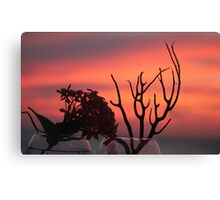 Black coral on the Sky Canvas Print