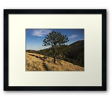 Mountain Lion Loop Framed Print