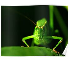 Wednesday Wonder Shot - Bush Cricket Poster