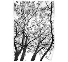 Sakura Like Image Poster