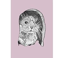Hamster sketch Photographic Print