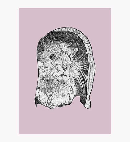 Hamster sketch Photographic Print